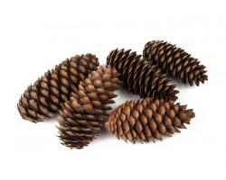 Шишки еловые (5шт) натуральные арт.62345