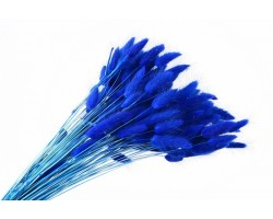 Лагурус крашенный синий