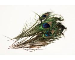 Набор перьев павлина 25-30см (5шт) 5500011723404