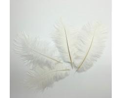 Набор перьев страуса 20-25см (5шт) белый 5500011723379