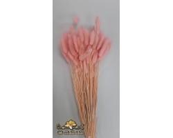 Лагурус стабилизированный крашенный светло-розовый