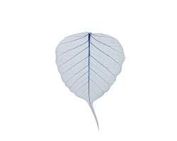 Набор листьев скелетированных (50шт) темно-синий