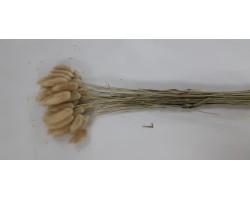 Лагурус (60шт) натуральный арт.82308