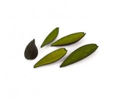 Каноина (5шт.в упак.) зеленый арт.0063