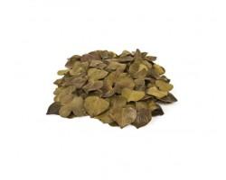 Листья каракао сердечки оливковые 50гр арт.0047