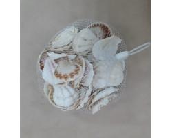 Ракушки декоративные Палау 100гр арт.2905