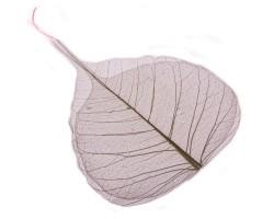 Набор листьев скелетированных (50шт) белый