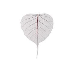 Набор листьев скелетированных (50шт) коричневый