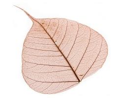 Набор листьев скелетированных (50шт) оранжевый