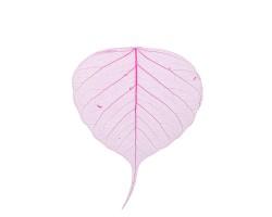 Набор листьев скелетированных (50шт) ярко-розовый