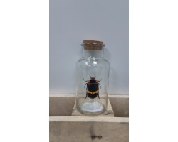 Бутылка с пробкой (стекло) D8*H16см